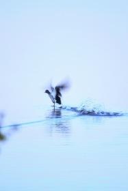 © Sami Saarinen